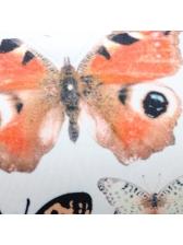 Butterfly Print Short Sleeve Two Piece Short Set