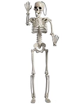 60cm Simulation Human Halloween Skeleton Props